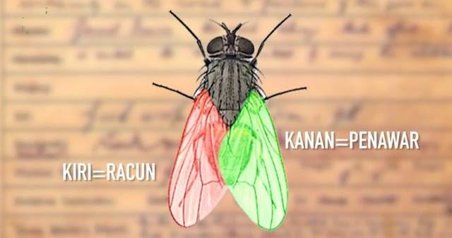 Lalat Bisa Menyembuhkan Diare